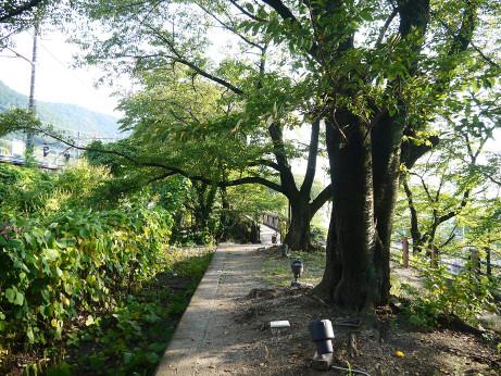 20151010_katunuma_st_4