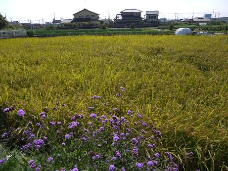 20151118_fuukei_1