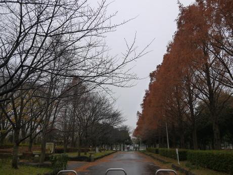 20151215_kouyou_01