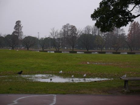 20151215_bird