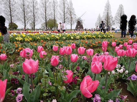 20160412_tulip_01