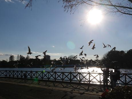 20161217_bird_1
