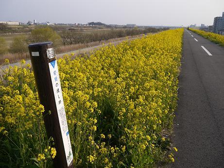 20170323_zenmanowatashiato