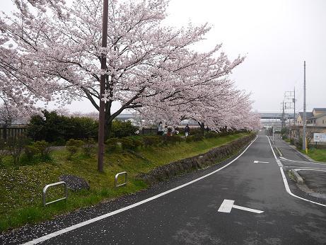 20170414_sakura_07
