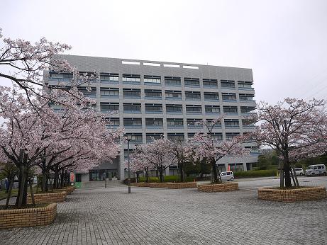 20170419_sakura_04