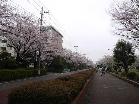 20170422_sakura_04
