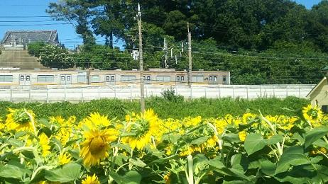 20180720_himawari_4
