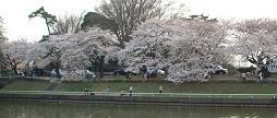 20060402_mizumotoike