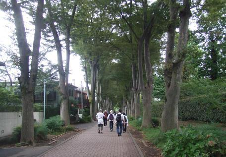 20101002_keyaki_namiki