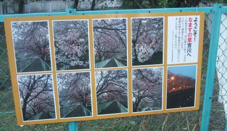 20101009_sakura_namiki