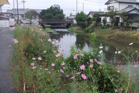 20101014_kosumosu