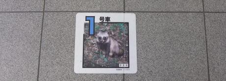 20101030_tanuki