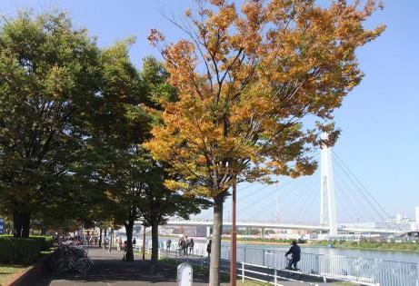 20101113_koyo