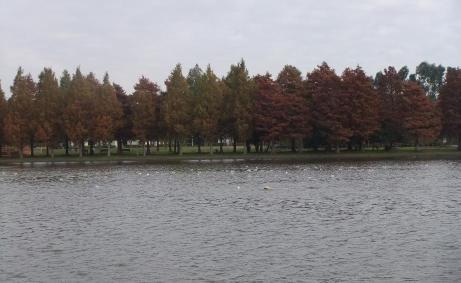 20101126_misato_park