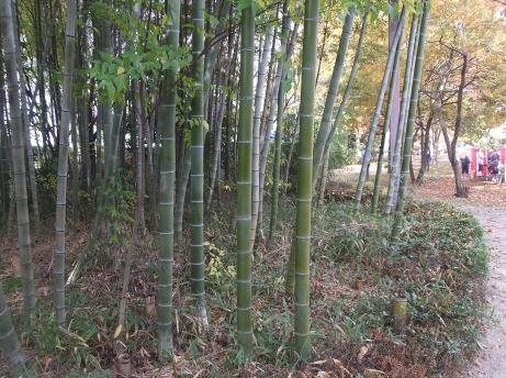20101203_minkaen4