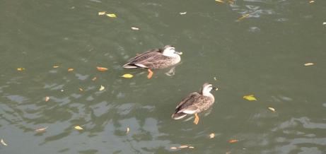 20101204_water_bird