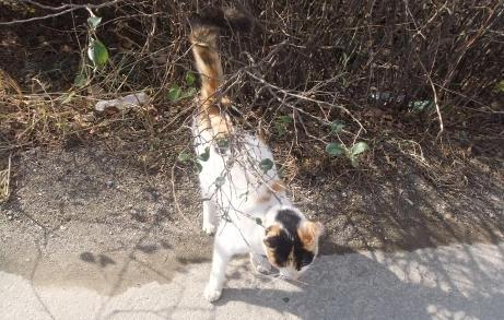 20101204_cat