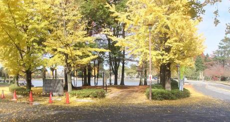 20101210_suijyou_park2