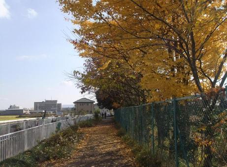 20101211_road6