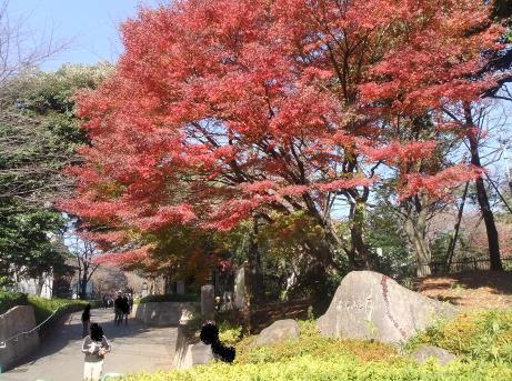 20101216_asukayama_park2