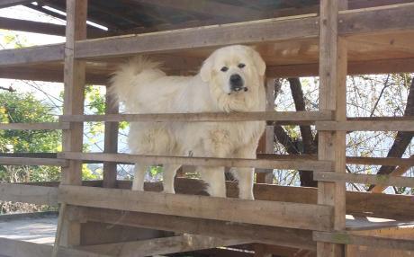 20101222_dog