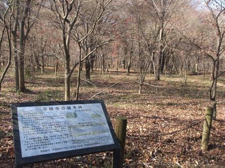 20101225_zoukibayashi1