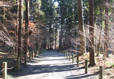20101225_zoukibayashi3