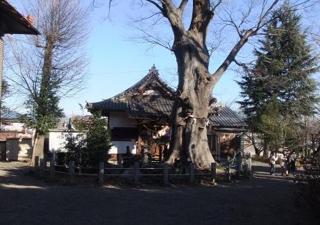 20110111_shiroyama_inari_jinjya