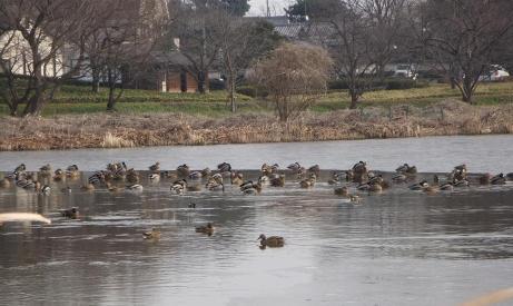 20110119_bird