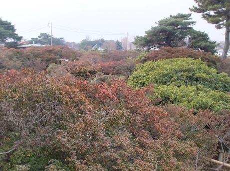 20110120_tsutsuji