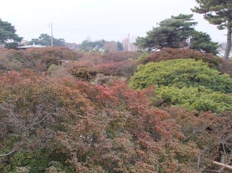 20110123_tsutsuji_park