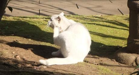 20110207_cat
