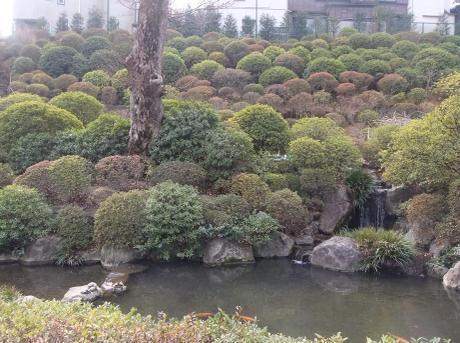 20110216_tutuji
