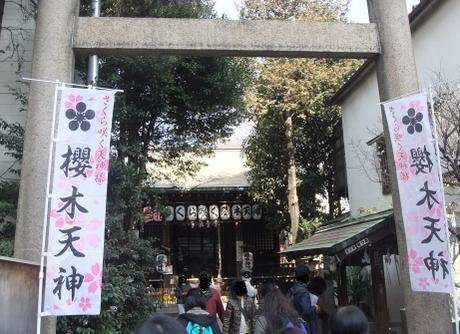 20110218_sakuragi_jinjya