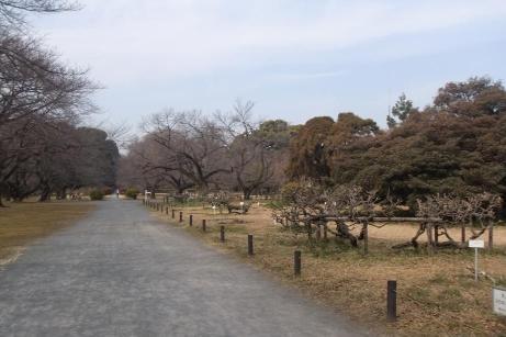 20110218_koishikawa_syokubutsuen