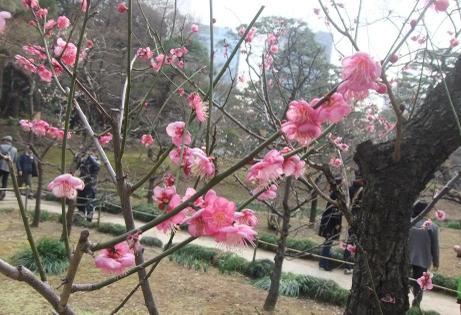 20110219_koishikawa_bairin2