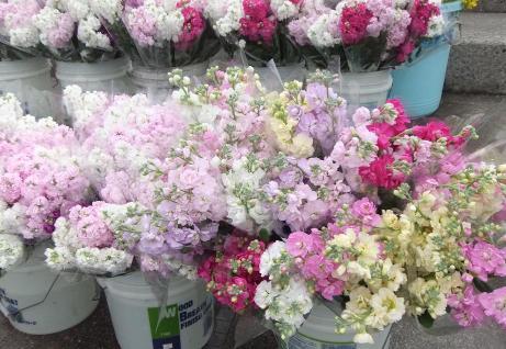 20110221_flower1