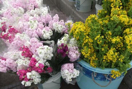 20110221_flower2