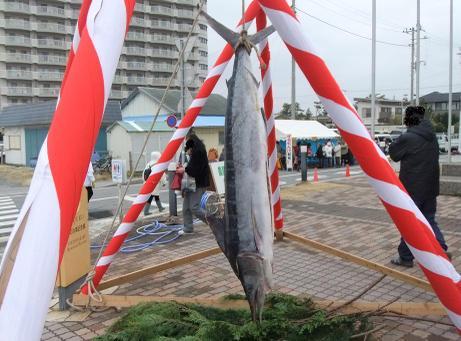 20110221_kajiki