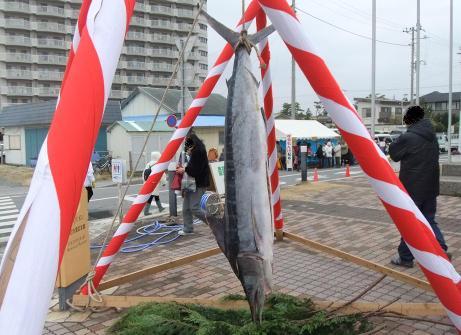 20110306_kajiki_maguro