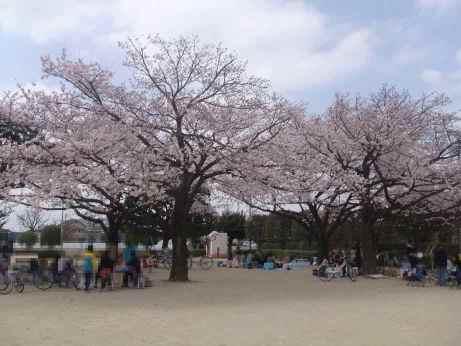 20110414_sakura_park2