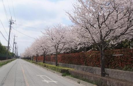 20110416_road