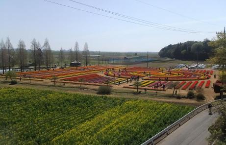 20110420_tulip1