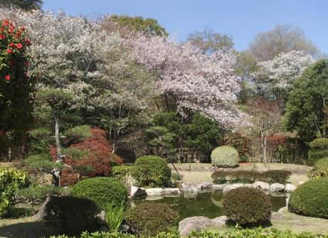 20110421_japanese_garden_2