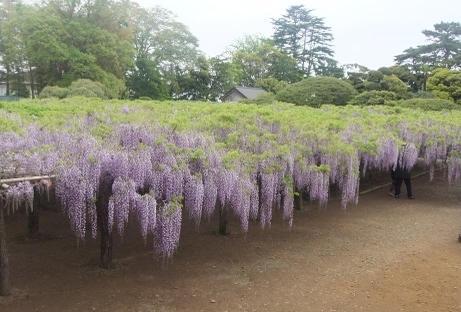 20110507_ushijima_2