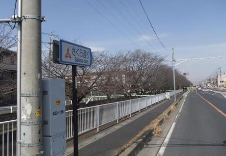 20110520_sakura_dori