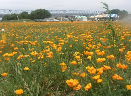 20110523_flower2