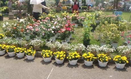 20110526_flower1