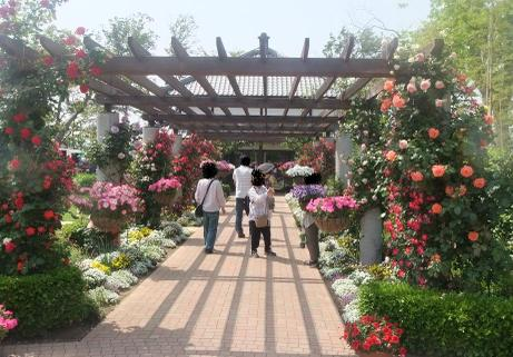 20110527_flower4