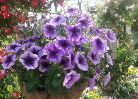 20110527_flower5